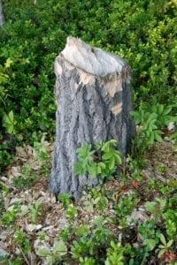Oahu Tree Stump Removal